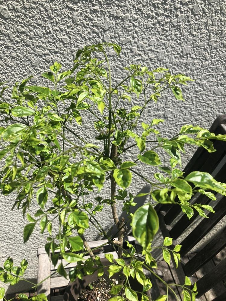 これ、なんて植物ですか?