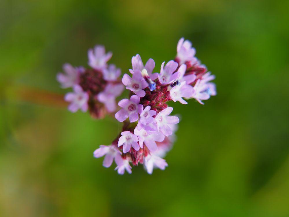 荒川河川敷で見かけた花です。 画像で名前おわかりになる方、教えてください。 よろしくお願いします。