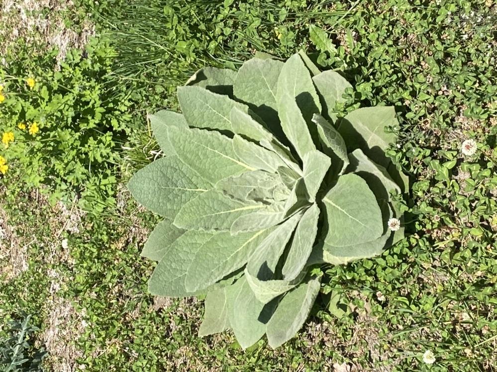 この植物はなんでしょうか???