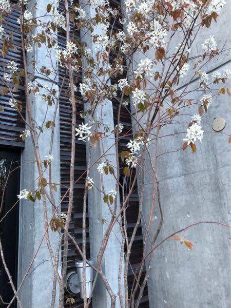 札幌在住なのですが、この木が何の木か教えてほしいです!
