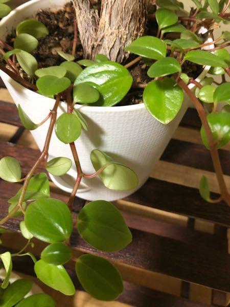 この植物なのか、雑草なのか名前を教えてください。 育て方を調べたいです。よろしくお願いします。