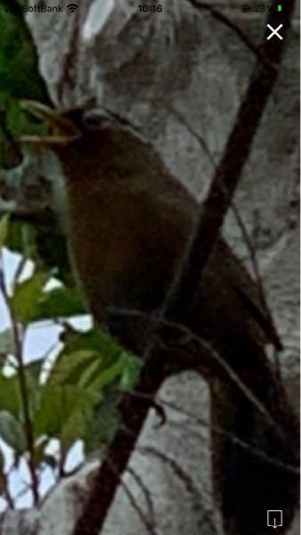 この鳥は何という鳥ですか? 宜しくお願いします。