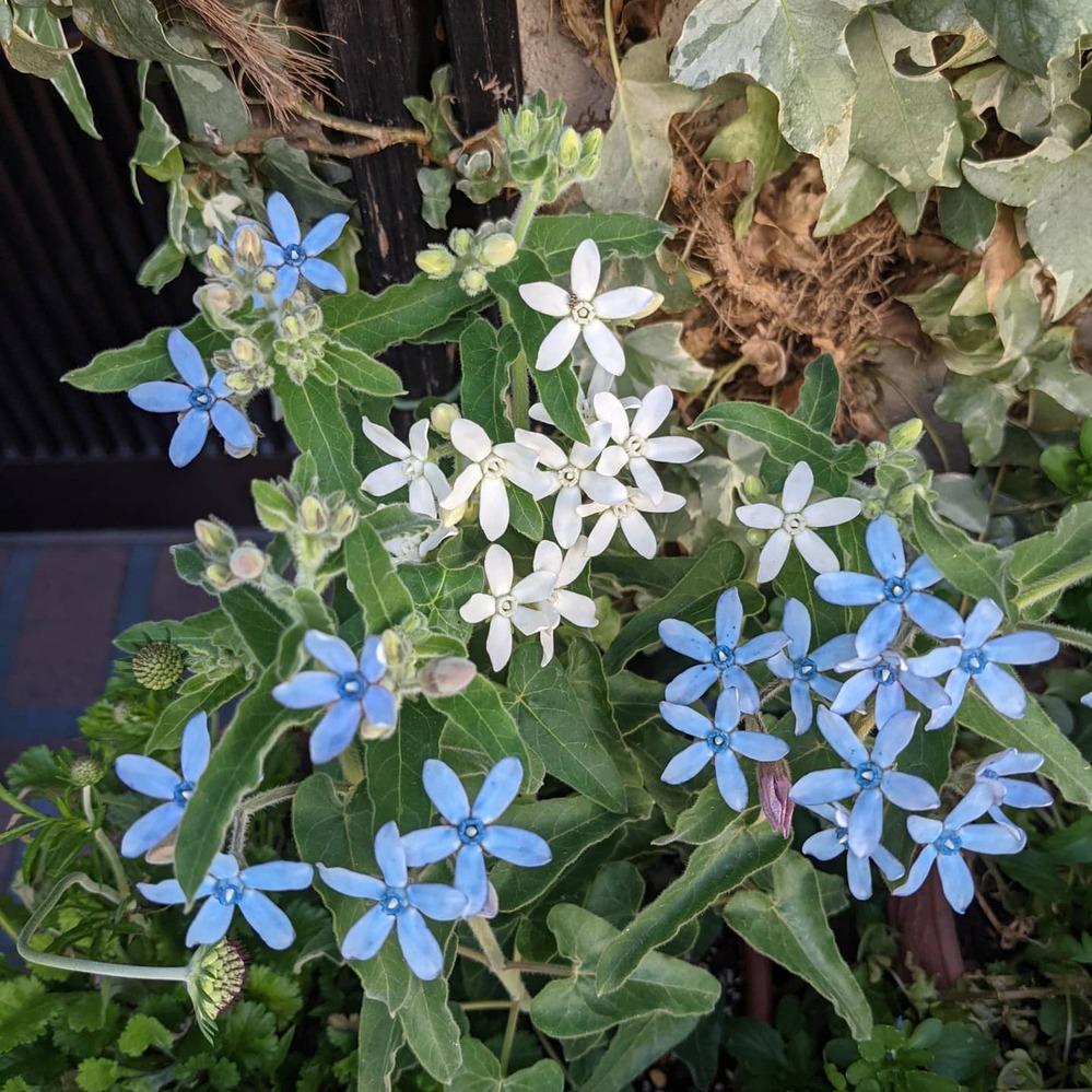 なんていう花ですか?