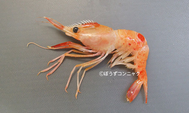 海老名と言えばやっぱりボタンエビがおすすめにおいしいですよね?