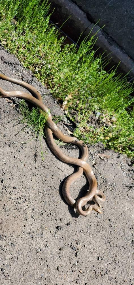 ヘビに詳しい方、教えてください。 このヘビの名前はなんですか?