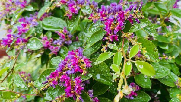 この花の名前を教えてください。 本日撮影しました。