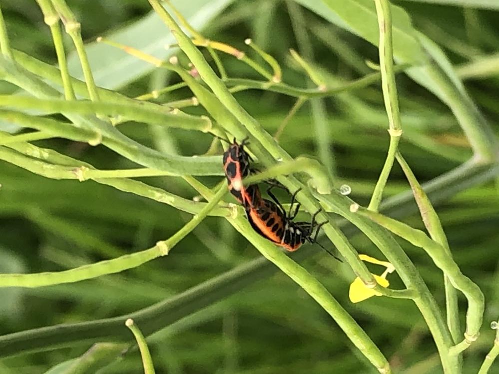 これってなんていう虫ですか?