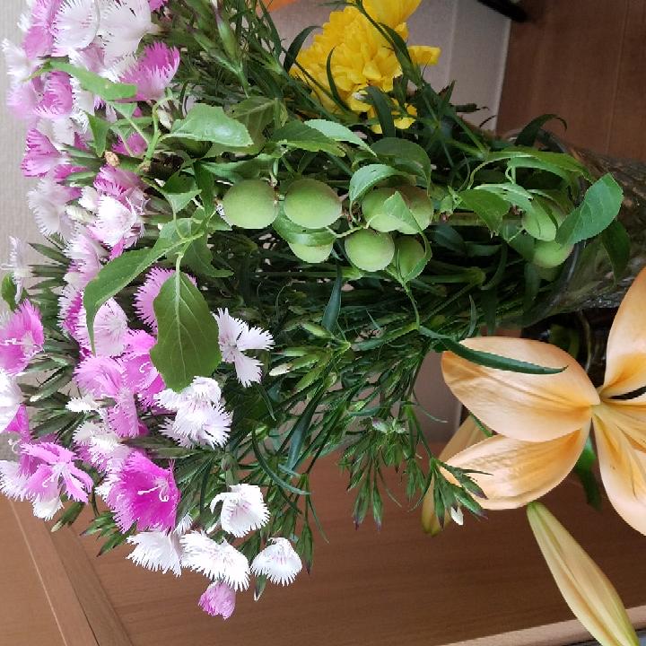 今回、初めて撫子の花を花瓶に刺しました。 今までの花に比べて、水が悪くなるのが早い気がします。 (毎日水を取り替えてるのですが、他の花に比べて撫子だけヌルヌルする) 撫子の花は悪くなりやすいデリケートなものなんですか? あと、花屋に置いてあった梅の実は鑑賞用でしょうか?やっぱり、食べれませんよね? 水を取り替えてるときに何個か実がポロポロと落ちてしまうので、もったいないなと思ってしまいます。