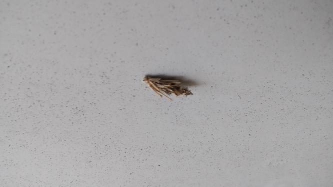 これがよく庭の物置とかに くっついてるんですが、 動いてるような動いてないような 虫だったりするんですか?