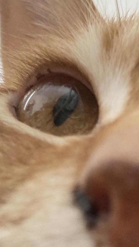 至急お願いします!;;;; 家の猫の目に気泡?みたいな線とかも右目だけ出来ていてこれは病気でしょうか…;;;;よく右目だけウインクするな可愛いなって思ってたんですけど…