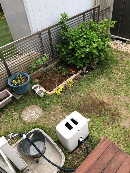 庭の芝生がハゲ散らかしています。 芝生を剥がさずに、ヒメイワダレソウやタイムなどのグランドカバー系植物を植えても、芝生があると繁殖しませんか? 芝生の根は地中に張り巡っていると思います。 4.5年前に敷いた芝なので。高麗芝だったと思います。 よろしくお願いします。