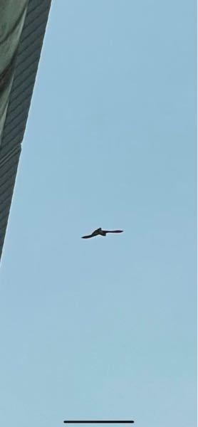 この猛禽類わかりますか? 5月15日 愛知県甚目寺で見かけました トビよりずいぶんと小さな鳥でした