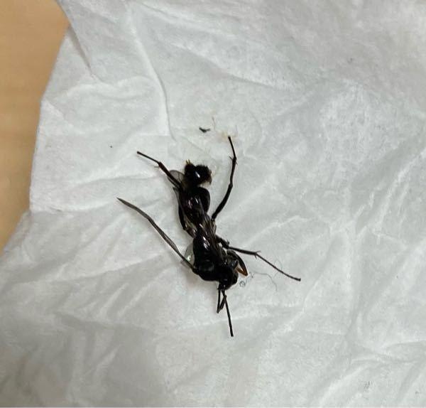 この虫はなんという虫ですか?(死骸画像) 手のひらを刺されたのですが、放っておいても大丈夫ですか?