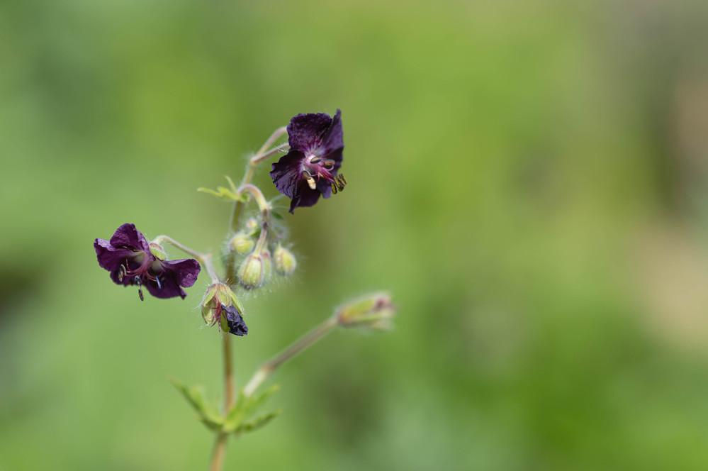 この植物の名前がわかる方が居られましたら教えて下さい。 先週ハーブ園で咲いていた花です。
