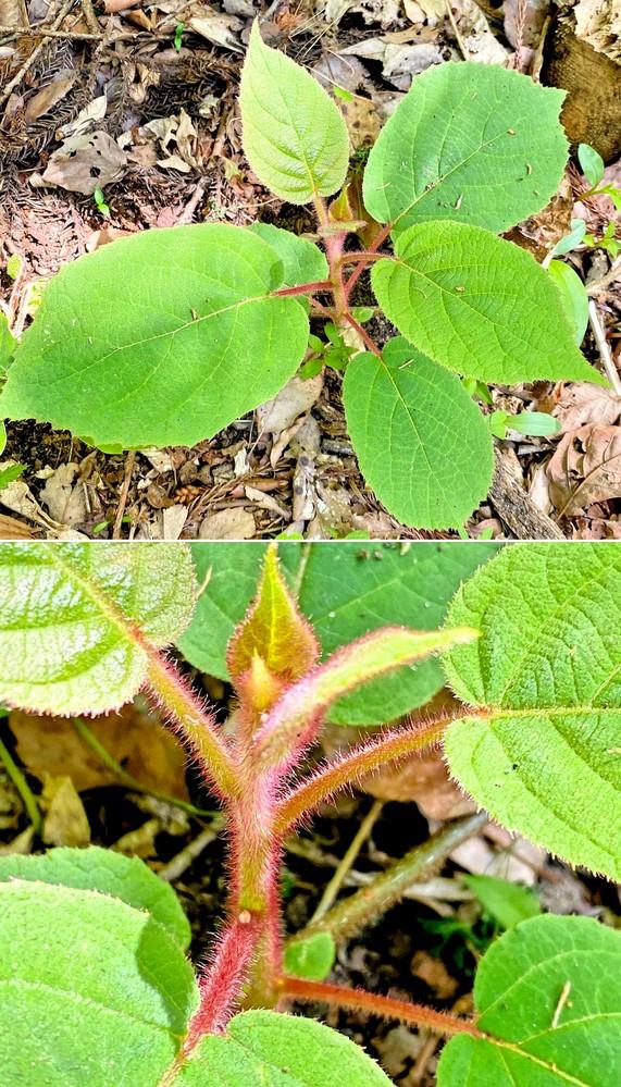 つる植物の名前を教えてください。