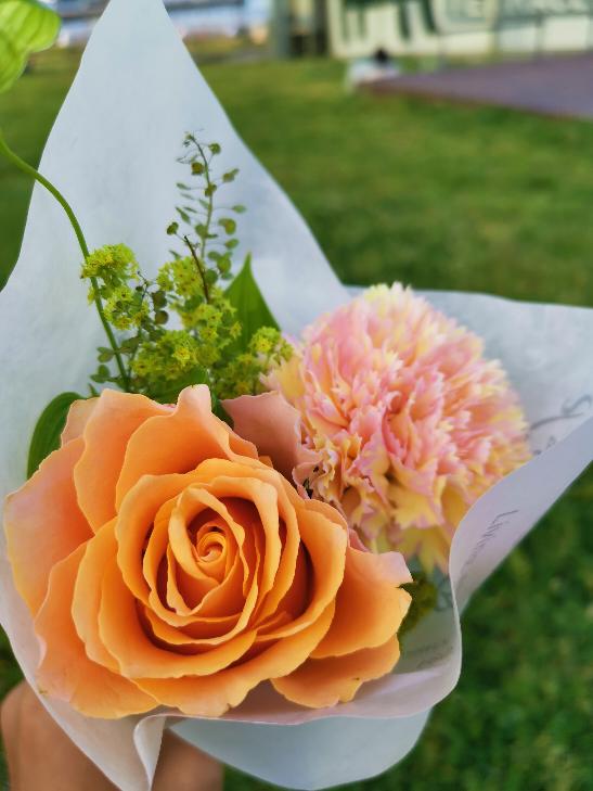 この写真の奥の方の花はなんという花ですか?
