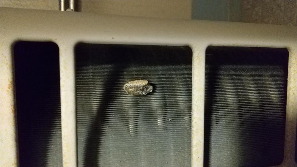 こ、これは何でしょうか? ベランダのエアコンの室外機の裏にくっついてます。 これから何か出てきますか? うまれた後ですか? 割りばしなどで(恐いけど)取って大丈夫ですか?