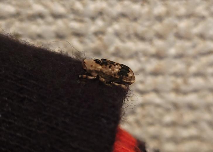 この虫はなんという虫でしょうか