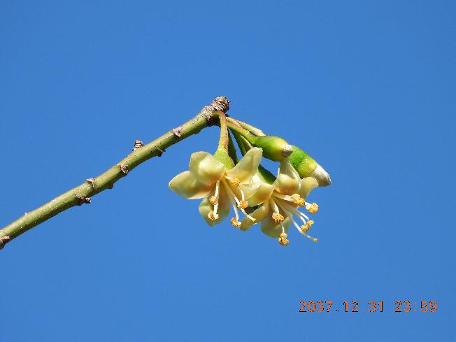 この木の名前教えて下さい。葉っぱが一枚も無くて何の木か分かりません。