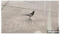 この鳥の名前を教えてください