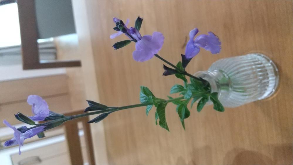 今ちょうど我が家の、庭にこの花が咲いてます。この花の名前を教えてください