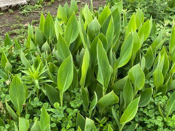 この植物はなんという植物ですか?