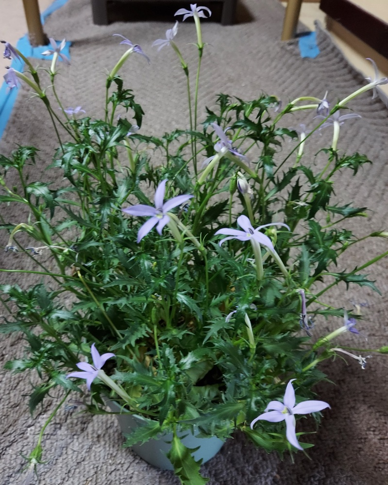 この花の名前を教えてください。
