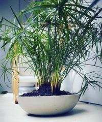 この植物の名前がわかる方いますか?