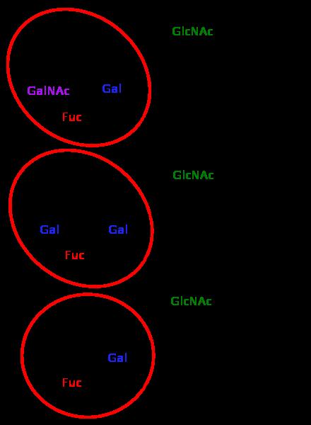 血液型は赤血球の表面に結合している糖鎖の種類によって異なることは理解できたのですが、糖鎖間の結合様式がわかりません。 下の構造図を見るに脱水縮合しているんですか? 特にA型のガラクトースとNーアセチルガラクトサミン間、 B型のガラクトースどうしの結合様式を知りたいです。 当方高校生なので、高校生でも理解できるような解説をしていただけると嬉しいです。