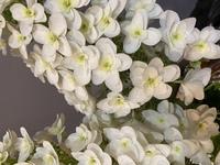 このお花の名前がわかる方いらっしゃいますか?