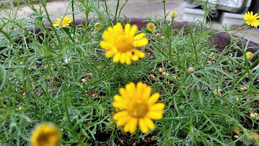 この花の名前を教えて下さい。 ピンぼけしていて分かりづらいですがよろしくお願いします。
