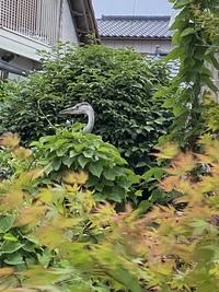 住宅街に変な鳥がいました。  頭の部分しか取れなかったのですが、何の鳥かわかる方いますか?