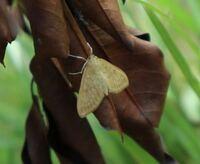 何という種名の蛾ですか