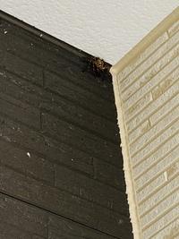 家の玄関にいたのですが、この蜘蛛は毒持ってたりしますか?  小さい子供がいるので気になって
