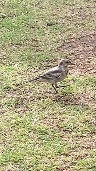 庭に来た鳥です。 何という種類ですか?