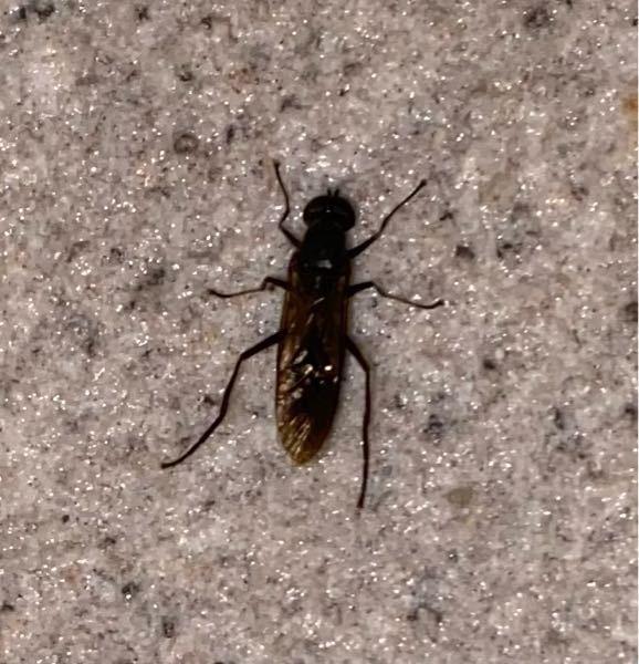 なんていう昆虫ですか? はばちの仲間?