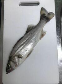 千葉県銚子市 利根川河口付近 海から3キロ のところで この魚を釣れました。種類を教えてください。お願いします。