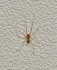これは何という名前の蜘蛛ですか?