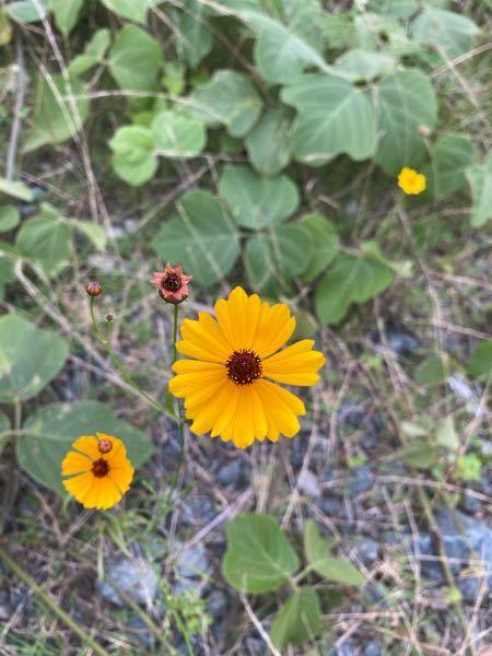この花の名前を教えて下さい。