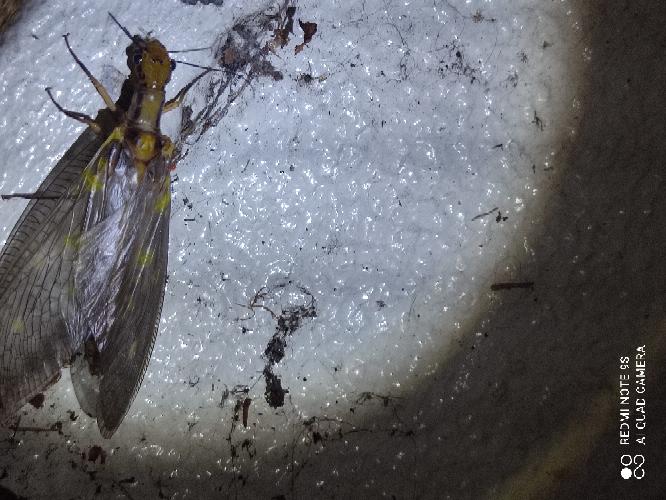 最近見かけるこの大きくて気持ちが悪い虫がいるのですが 誰かわかる方いますか?
