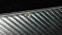 この蜘蛛は何ですか?