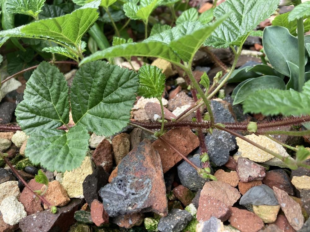 この植物はなんて言う名前ですか?