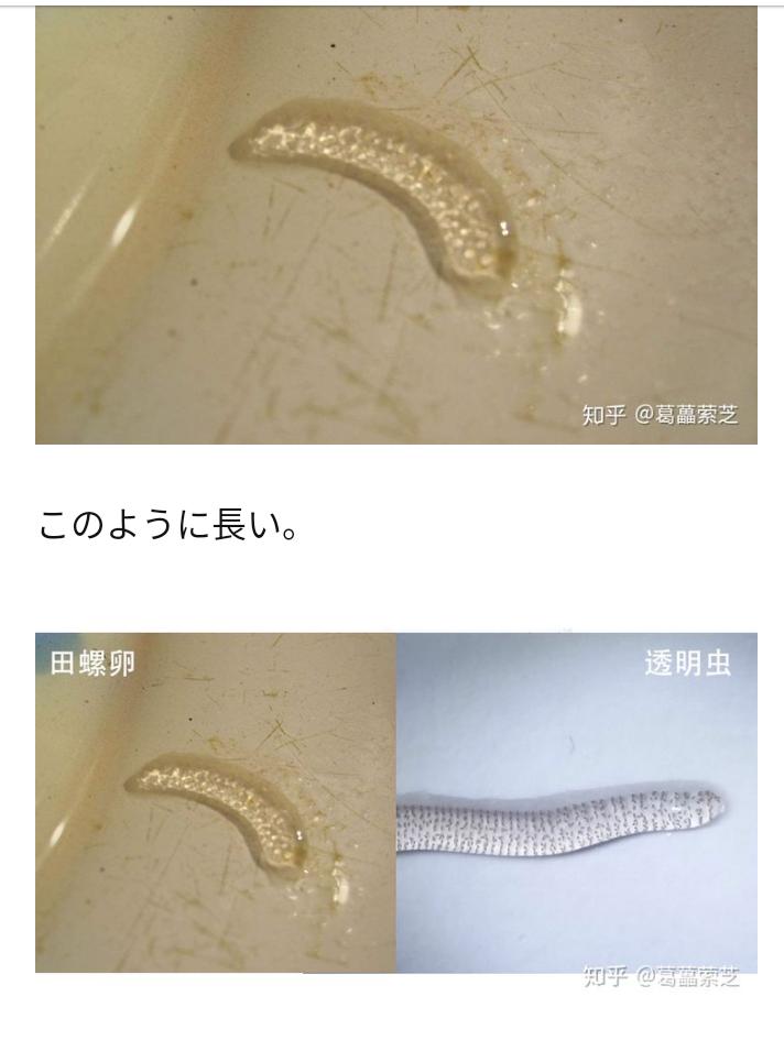 庭でビニールプールに水を張って数時間放置したのですが、画像のような透明な虫?がたくさん浮いていました。 調べてみてもよくわかりませんでしか。 何て言う虫でしょうか? また、人体に悪影響ありますか?