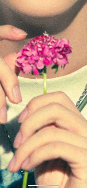 この花はなんですか?