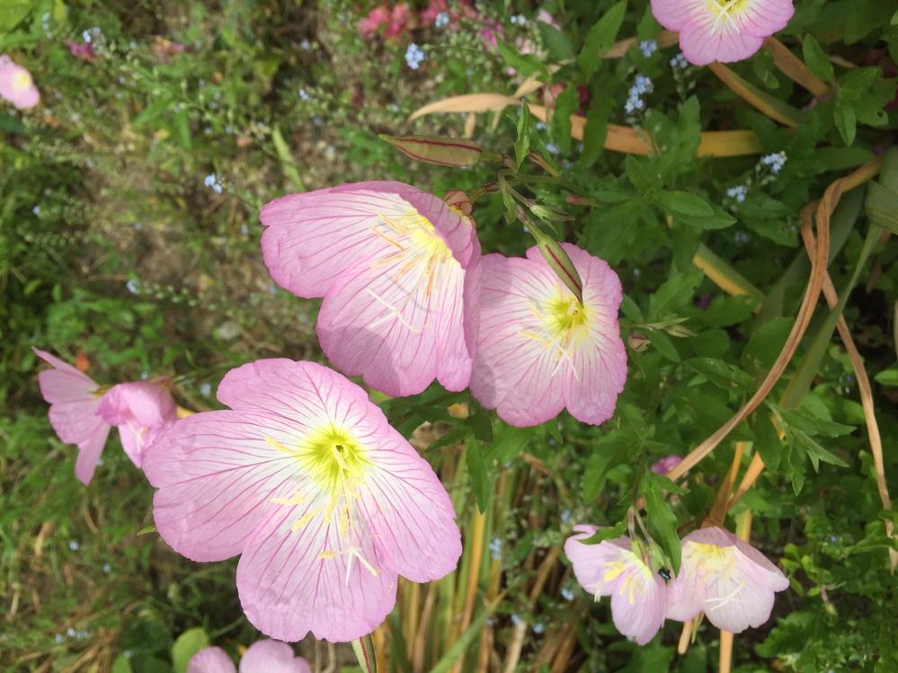 この花の名前教えて下さい