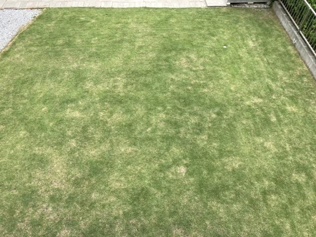 芝5年目です。 まだらにはげた所があり、緑もやや薄いです。原因がはっきりせず、肥料をやってはいますがいまいちです。 何か対処法があれば教えて頂きたいです。