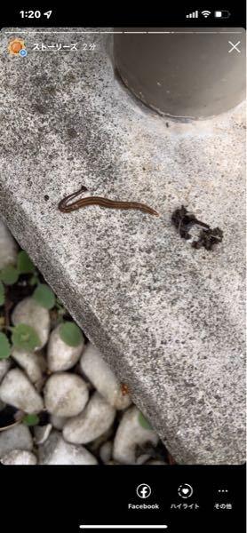 この生物の名前ってなんですか?めっちゃ伸びます