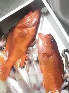 この魚頂いたんですが、食べられますか? なんという名前の魚ですか? 食べるのなら煮付けですか?