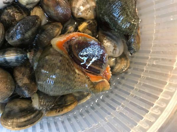 これは何という貝でしょうか?愛知美浜の潮干狩り場でとれました。