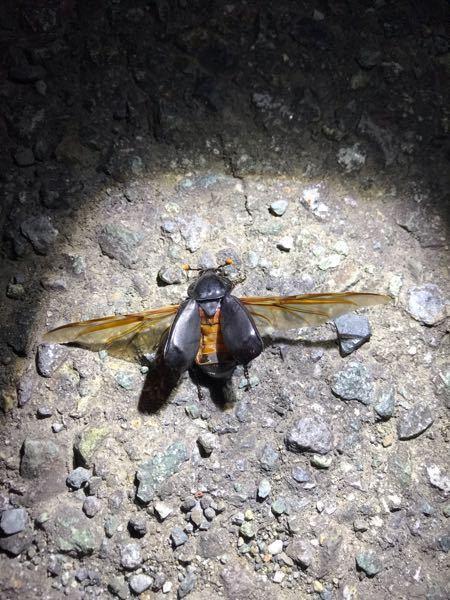 この昆虫がなにかわかる方いらっしゃいますか?><